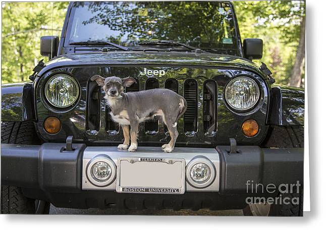 Crest Greeting Cards - Jeep Dog Greeting Card by Edward Fielding