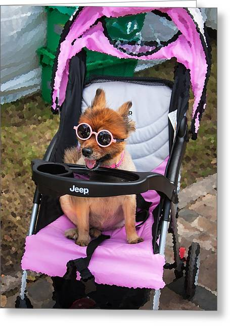 Show Dog Greeting Cards - Jeepster the Dog and Sunglasses Greeting Card by Rich Franco