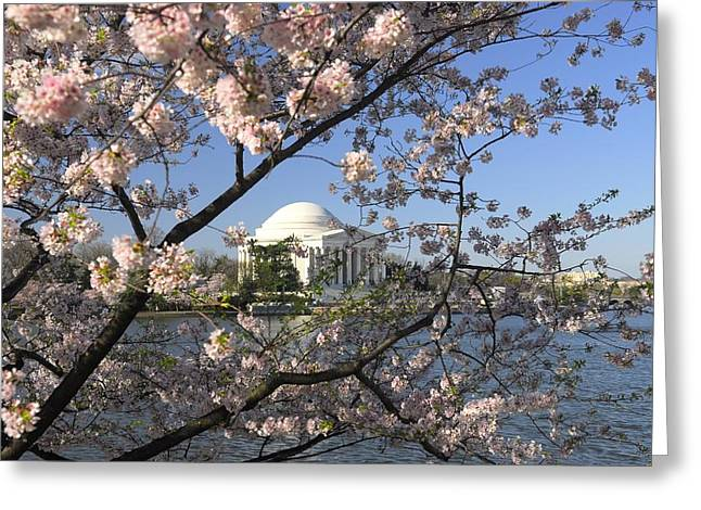 Jefferson Memorial Photographs Greeting Cards - Jefferson Memorial Through Cherry Blossoms Greeting Card by Willie Harper