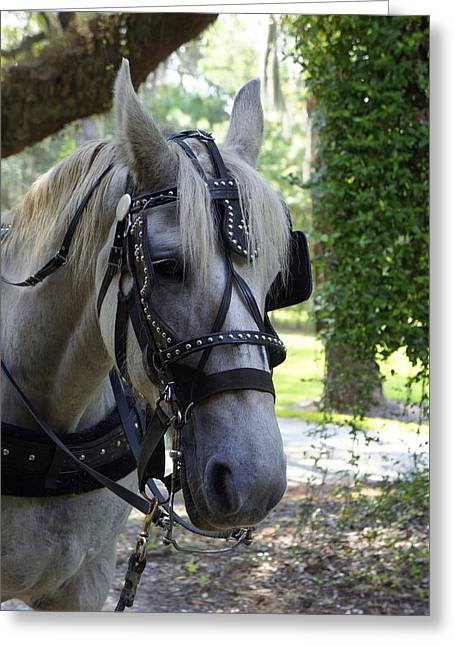 Laurie Perry Greeting Cards - Jekyll Horse Greeting Card by Laurie Perry