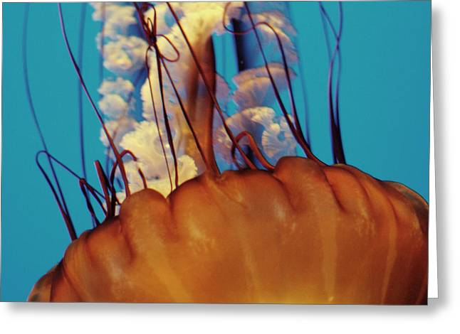 Aquatic Greeting Cards - Jellies Greeting Card by Julie Kalua