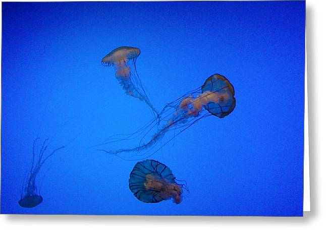 Recently Sold -  - Plankton Greeting Cards - Jellies Greeting Card by Mary Wozny