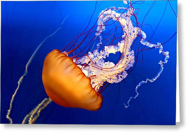 Blue Jellyfish Greeting Cards - Jelly #2 Greeting Card by Nikolyn McDonald