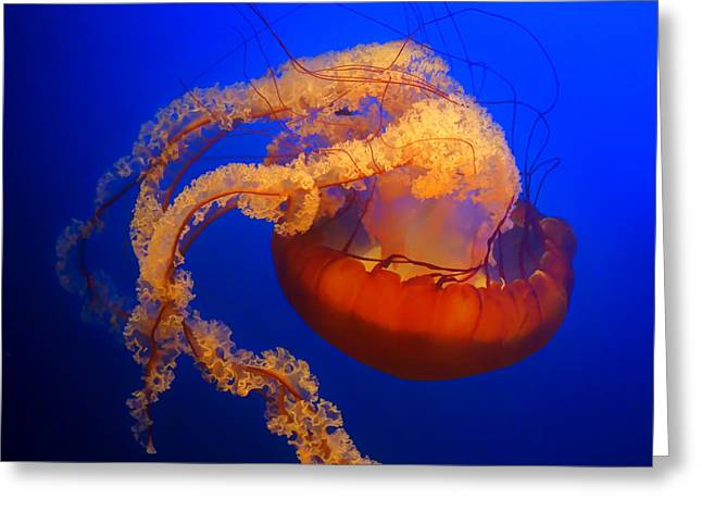 Jelly Fish Greeting Cards - Jelly #4 Greeting Card by Nikolyn McDonald