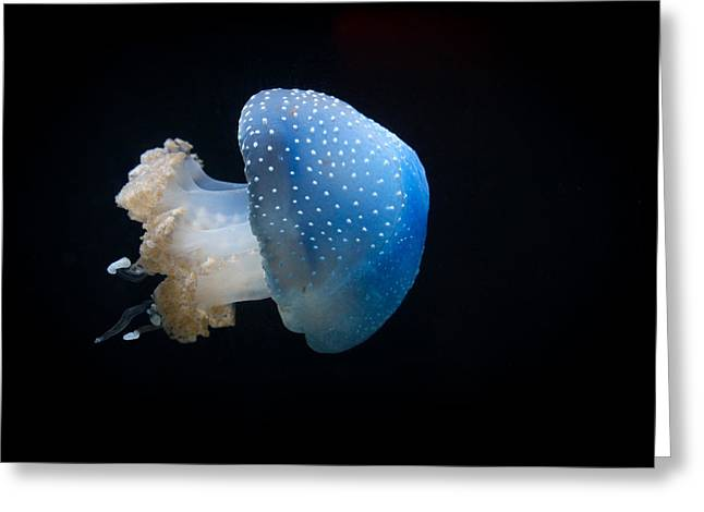 White Spotted Jelly Fish Greeting Cards - Jelly Greeting Card by Alicia Doyle