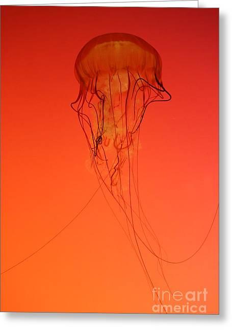 Jelly Fish Greeting Cards - Jelly Fish 2 Greeting Card by Kenzie Billings