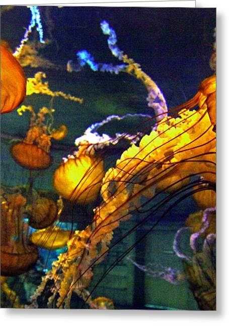 Jelly Fish Art Prints Greeting Cards - JELLY FISH 2 of 3 Panels Greeting Card by Sheila Kay McIntyre
