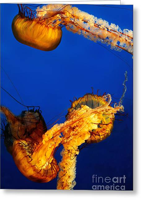 Jelly Fish Greeting Cards - Jelly Fish 2 Greeting Card by Terry Elniski