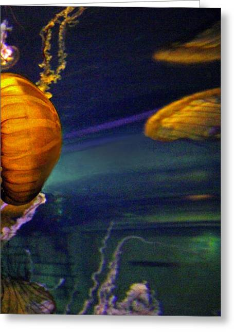 Jelly Fish Art Prints Greeting Cards - JELLY FISH 3 of 3 Panels Greeting Card by Sheila Kay McIntyre