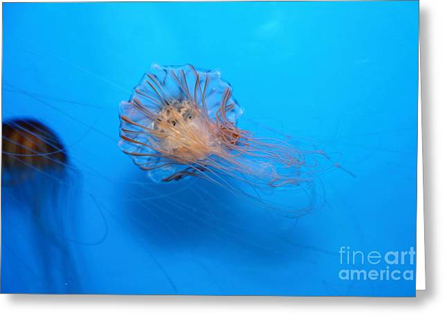 Jelly Fish Greeting Cards - Jelly Fish 5D24944 Greeting Card by Wingsdomain Art and Photography