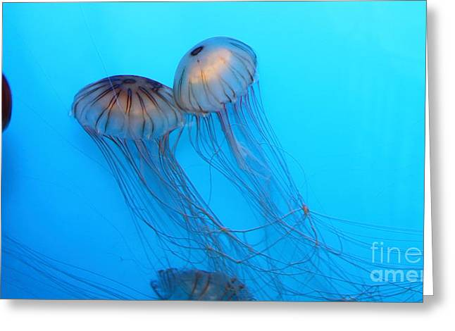 Snorkel Greeting Cards - Jelly Fish 5D24945 Greeting Card by Wingsdomain Art and Photography