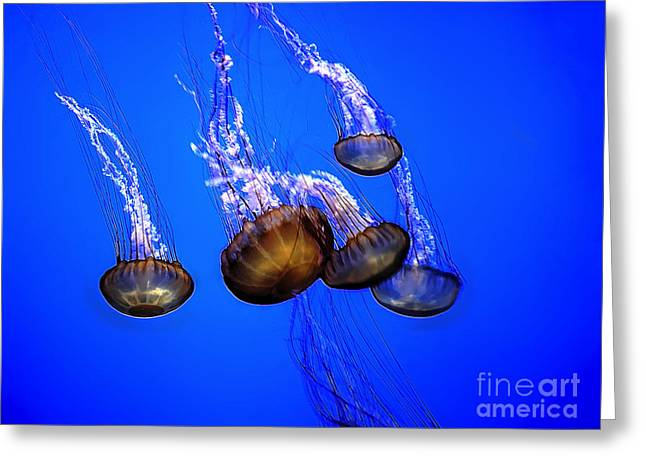 Jelly Fish Greeting Cards - Jellyfish Clique Greeting Card by Norman Gabitzsch