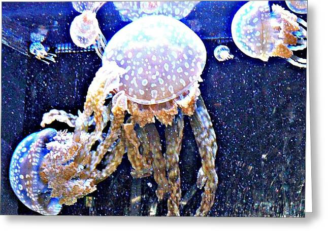 Jelly Fish Greeting Cards - Jelly Fish Greeting Card by Kristalin Davis