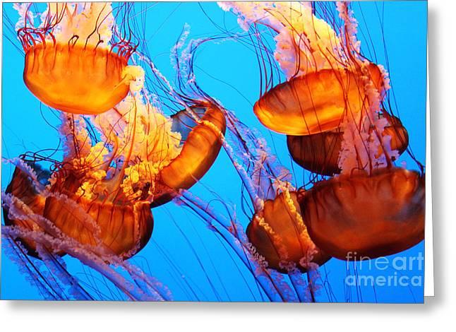 Jelly Fish Greeting Cards - Jelly Fish Greeting Card by Linda Arnado