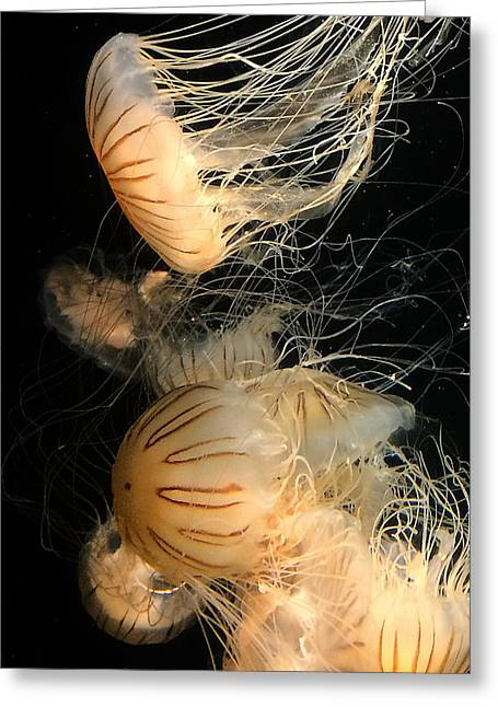 Jelly Fish Art Photographs Greeting Cards - Jelly Greeting Card by   Rixwerks Cards