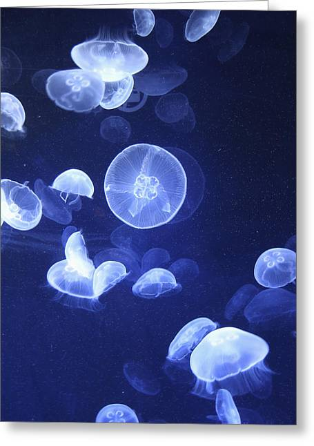 Ciudad Greeting Cards - Jellyfish At Loceanographic Aquarium Greeting Card by Mark Thomas