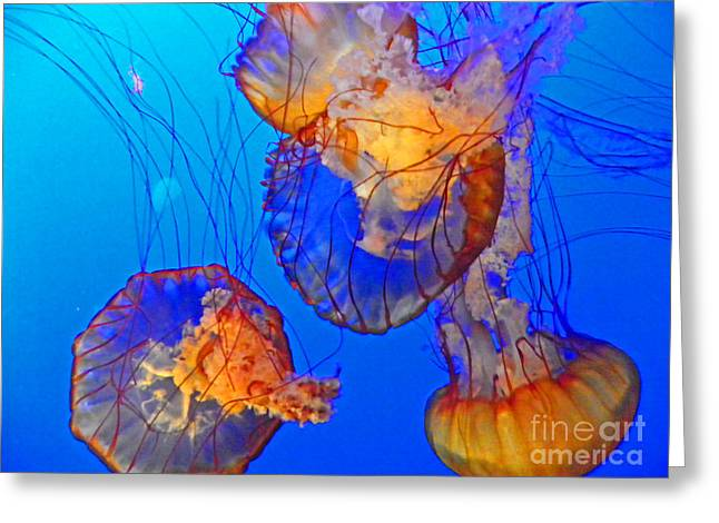 California Ocean Photography Greeting Cards - Jellyfish III Greeting Card by Elizabeth Hoskinson