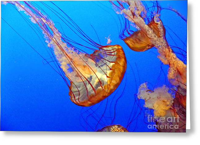 Sea Creature Photos Greeting Cards - Jellyfish IV Greeting Card by Elizabeth Hoskinson