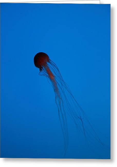 Jellyfish Greeting Cards - Jellyfish - National Aquarium in Baltimore MD - 12121 Greeting Card by DC Photographer