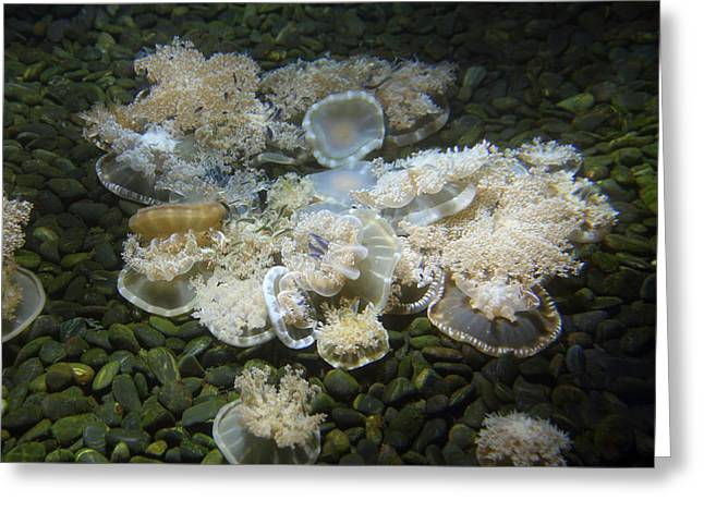 Aquatic Greeting Cards - Jellyfish - National Aquarium in Baltimore MD - 121213 Greeting Card by DC Photographer