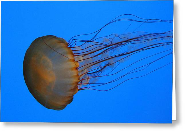 Aquatic Greeting Cards - Jellyfish - National Aquarium in Baltimore MD - 121227 Greeting Card by DC Photographer