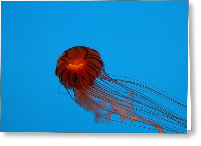 Jellyfish Greeting Cards - Jellyfish - National Aquarium in Baltimore MD - 121230 Greeting Card by DC Photographer