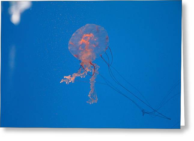 Attraction Greeting Cards - Jellyfish - National Aquarium in Baltimore MD - 121232 Greeting Card by DC Photographer