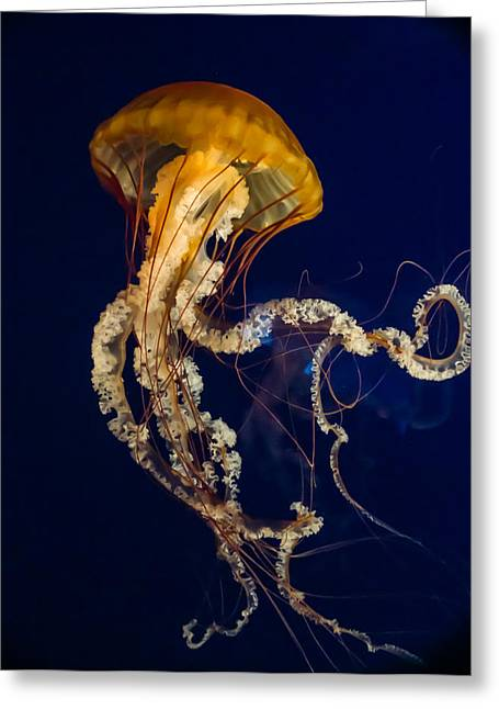 Tennessee Aquarium Greeting Cards - Jellyfish Rising Greeting Card by Douglas Barnett