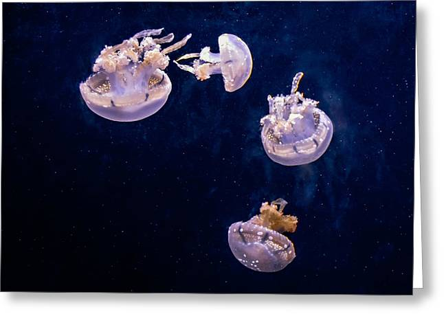 White Jelly Fish Greeting Cards - Jellyfish Greeting Card by Steve Harrington