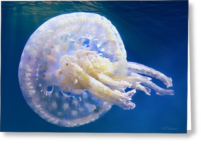 Jelly Fish Greeting Cards - Jellyfish Translucent Greeting Card by Barbara Chichester