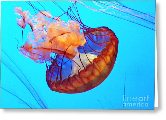 Jelly Fish Art Greeting Cards - Jellyfish VII Greeting Card by Elizabeth Hoskinson