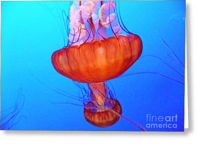 Blue Jellyfish Greeting Cards - Jellyfish VIII Greeting Card by Elizabeth Hoskinson
