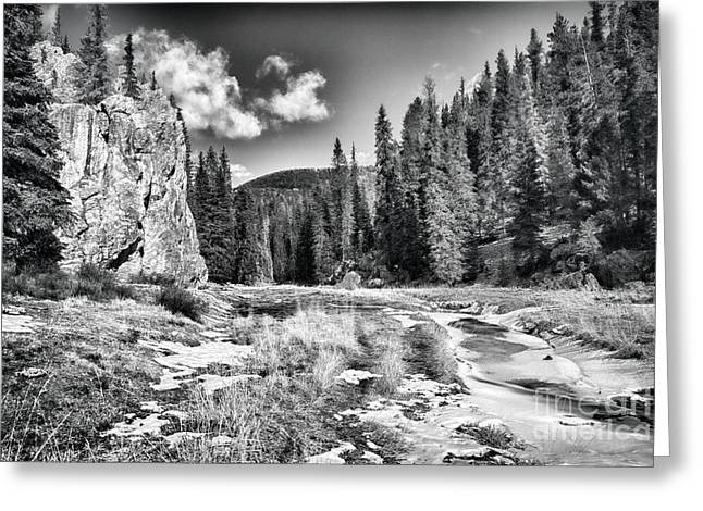Jemez Mountains Greeting Cards - Jemez Mountain Spring-Black and White Greeting Card by Douglas Barnard