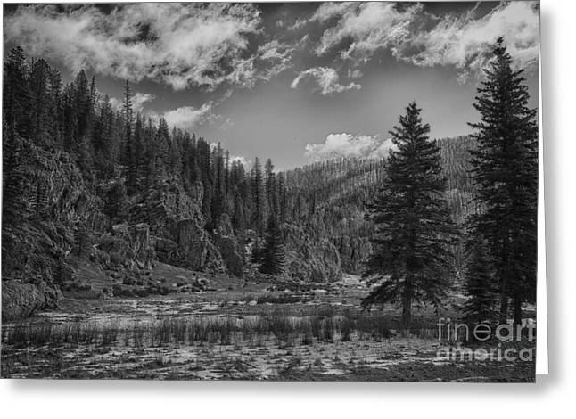 Jemez Mountains Greeting Cards - Jemez Mountain Spring-Black and White V2 Greeting Card by Douglas Barnard