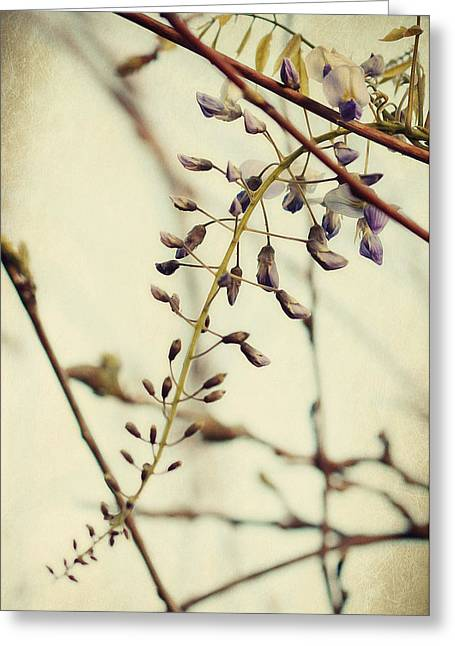 Wisteria Greeting Cards - Jenner Greeting Card by Amy Neal
