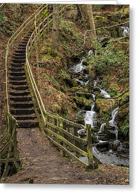 Cold Greeting Cards - Jepsons Clough Forest. Greeting Card by Daniel Kay