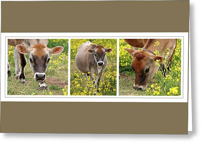 Dairy Farmers And Farming Greeting Cards - Jersey Fields of Gold Greeting Card by Gill Billington