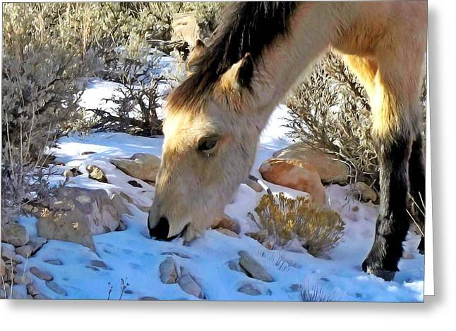 Grazing Snow Paintings Greeting Cards - Jewel eats snow Greeting Card by Lanjee Chee