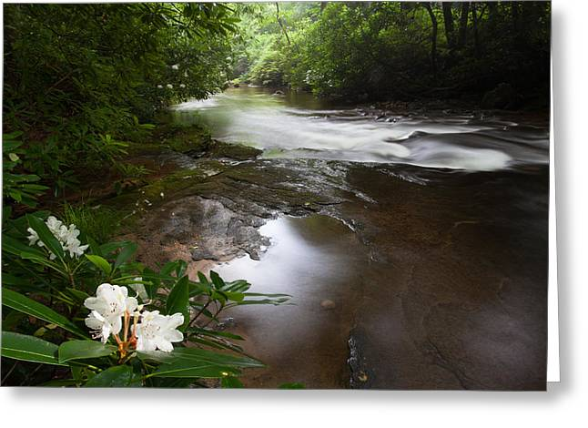 North Carolina Greeting Cards - Jewels of the Davidson River Greeting Card by Rob Travis