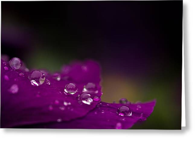 Droplets Greeting Cards - Jewels On Purple Greeting Card by Shane Holsclaw
