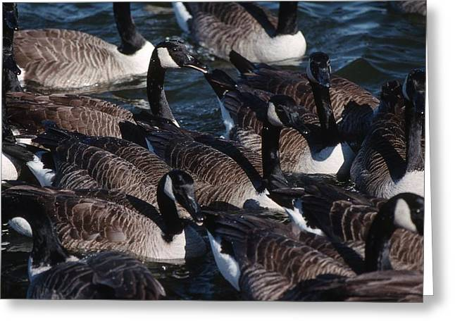 Photos Of Birds Greeting Cards - Jigsaw Greeting Card by Skip Willits