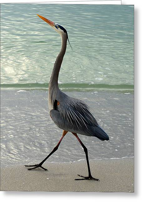 Struts Greeting Cards - Strutting the beach Greeting Card by David Lee Thompson