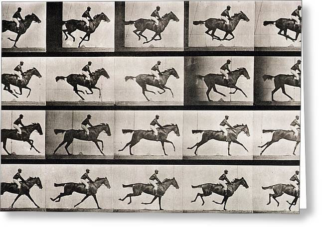 Leaping Greeting Cards - Jockey on a galloping horse Greeting Card by Eadweard Muybridge