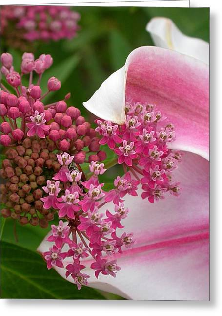 Swamp Milkweed Greeting Cards - Asclepias and Friend Greeting Card by Cynthia Wallentine