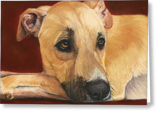 Rescue Pastels Greeting Cards - Joey - Rescued Street Dog Greeting Card by Sarah Dowson