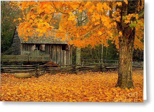 Grist Mill Greeting Cards - John Cable Mill in October Greeting Card by Larry Knupp
