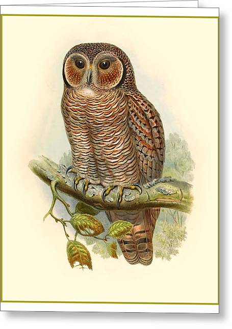 Antique Digital Greeting Cards - John Gould Owl Greeting Card by Gary Grayson