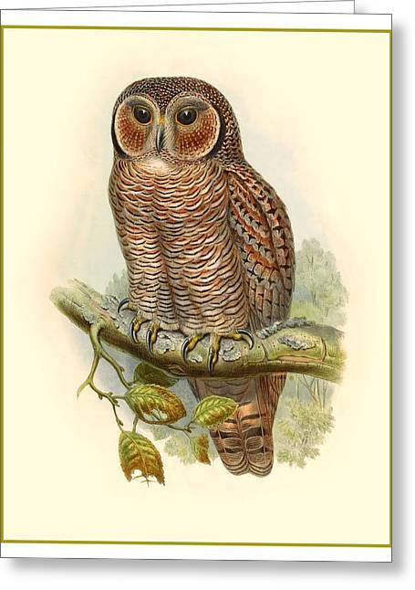 John Gould Owl Greeting Card by Gary Grayson