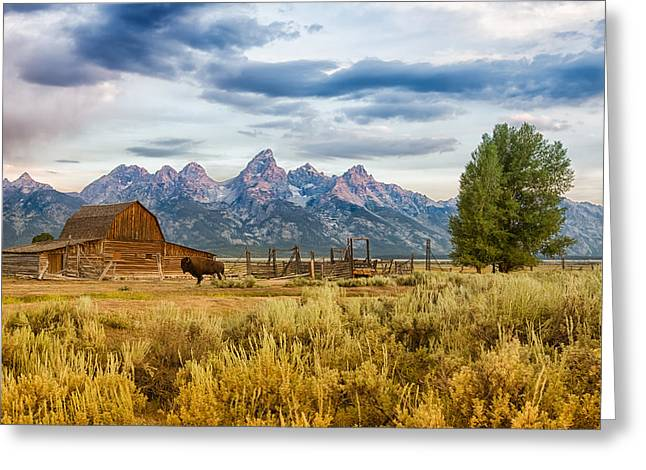Bison Greeting Cards - John Moulton Barn - Grand Teton National Park Greeting Card by Andres Leon
