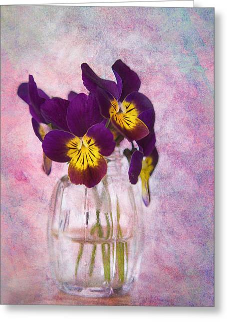 Johnny Jump Up Pansy Greeting Cards - Johnny Jump Ups Greeting Card by Kelly Coultas